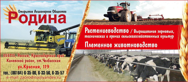 Выращивание зерновых технических и прочих сельскохозяйственных 564